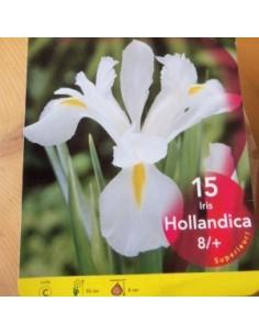 bulbes d 39 iris de hollande 15 les jardins d 39 hauti re. Black Bedroom Furniture Sets. Home Design Ideas