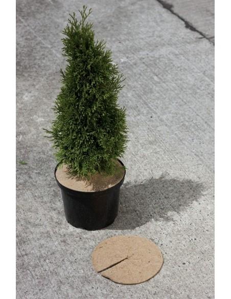 Colerettes anti-herbes
